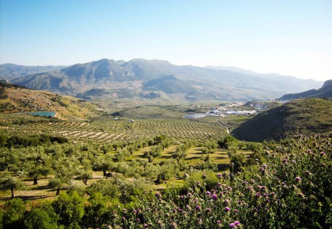 Sierra Mágina: PICUAL DE MONTAÑA