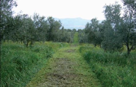 La cubierta vegetal es una herramienta de la agricultura ecológica.