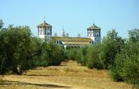La hacienda, entre olivos.