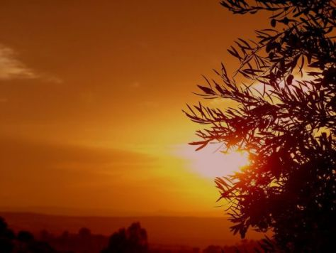 olivo-y-sol_179480panageos