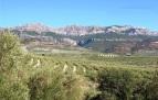 La olivicultura no es fácil en el accidentado territorio de Cazorla. / DOSC