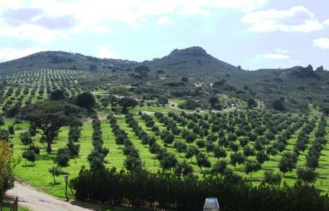 El cuidado olivar de Finca La Torre será el escenario de la carreta. / FLT