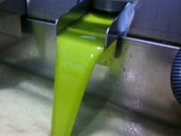 El aceite nuevo, recién exprimido. / O
